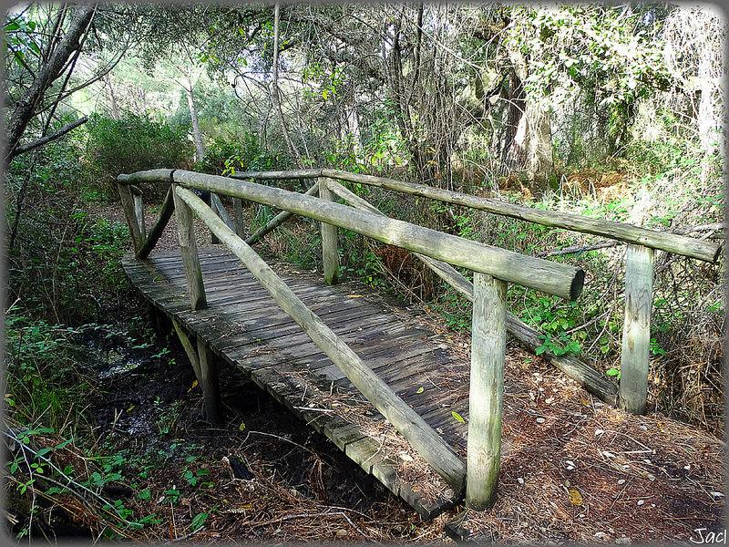 ドニャーナ国立公園の画像9