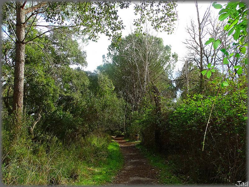 ドニャーナ国立公園の画像10