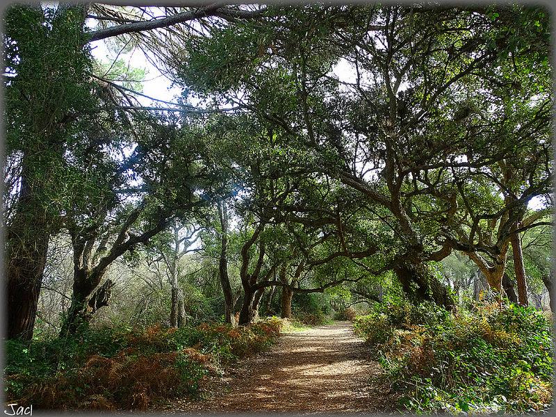 ドニャーナ国立公園の画像11
