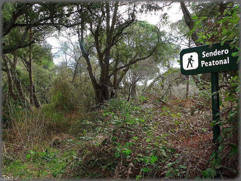 ドニャーナ国立公園の画像12