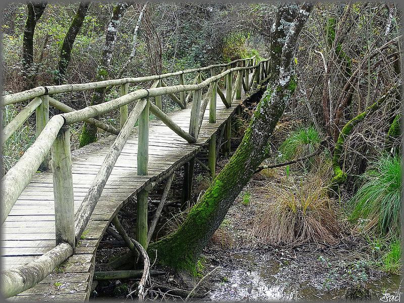 ドニャーナ国立公園の画像13