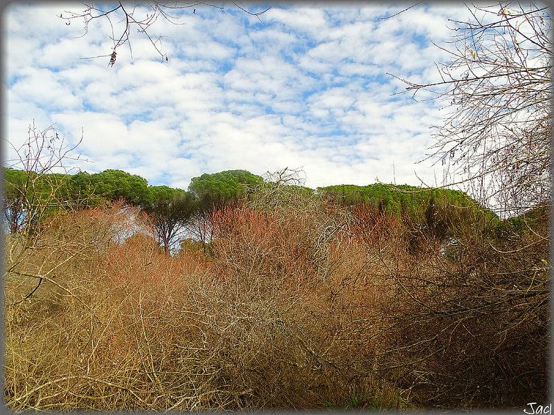 ドニャーナ国立公園の画像15