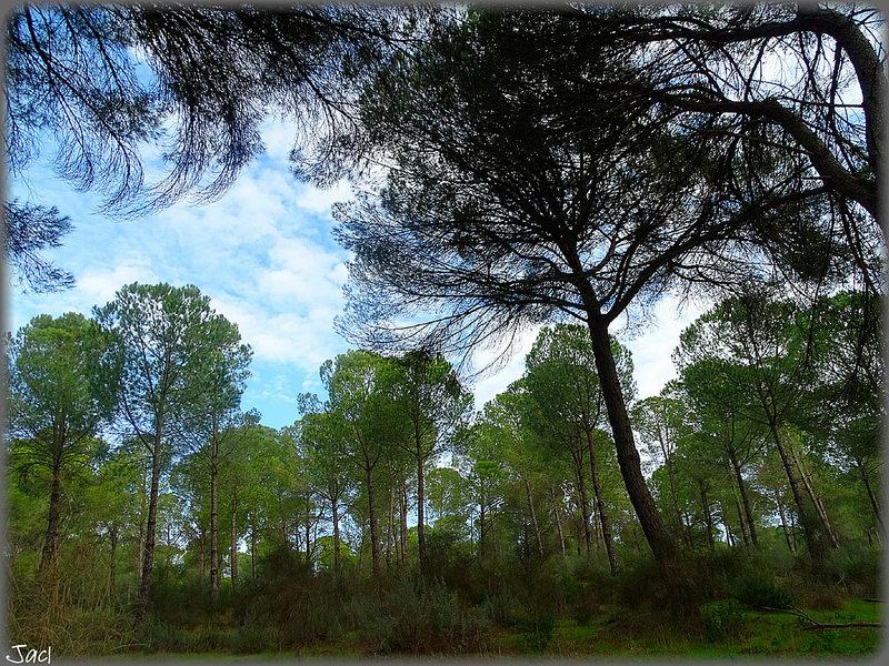 ドニャーナ国立公園の画像17
