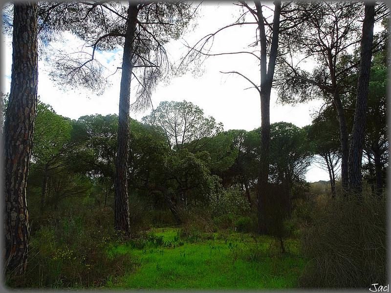 ドニャーナ国立公園の画像22