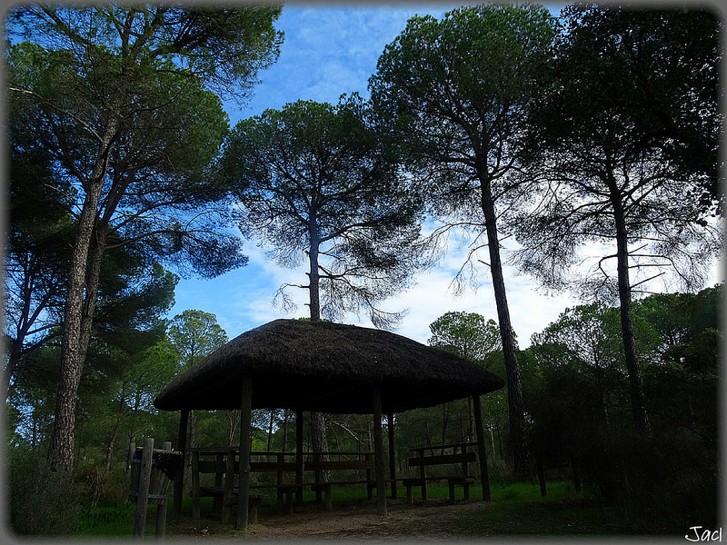 ドニャーナ国立公園の画像24