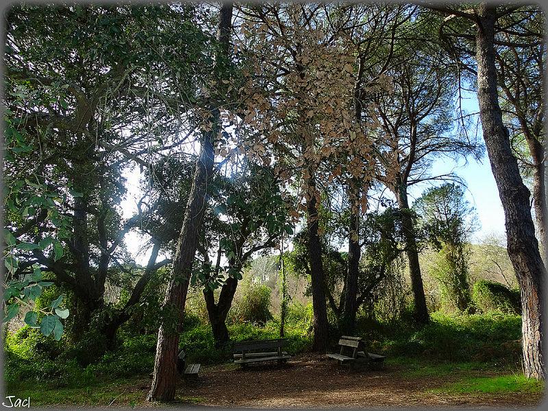 ドニャーナ国立公園の画像26
