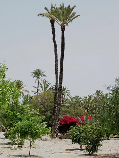 エルチェの椰子園の画像3