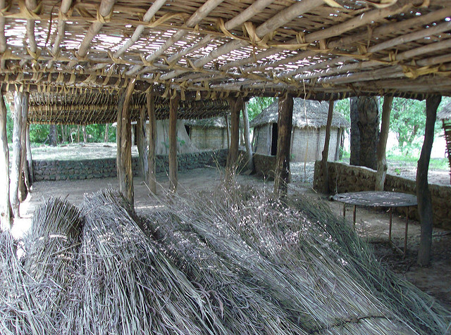 ニョコロ=コバ国立公園の画像5