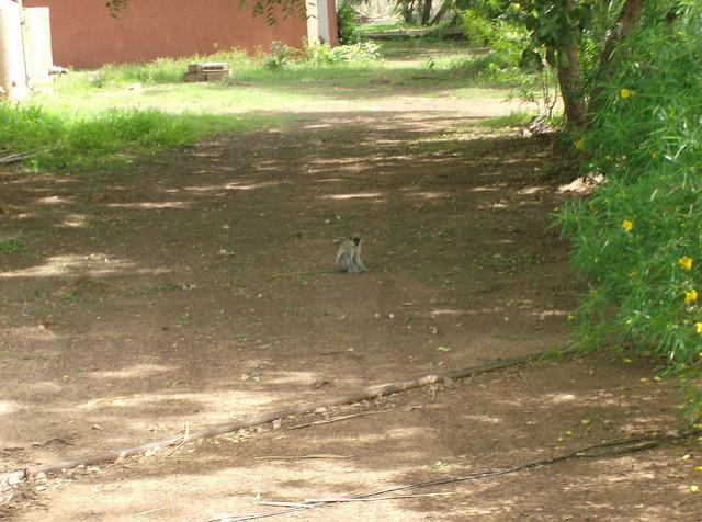 ニョコロ=コバ国立公園の画像7