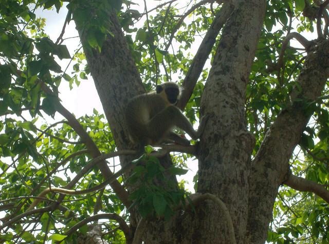 ニョコロ=コバ国立公園の画像8