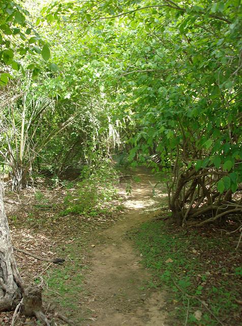 ニョコロ=コバ国立公園の画像9