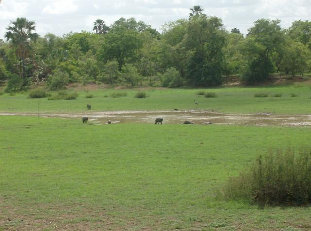 ニョコロ=コバ国立公園の画像10