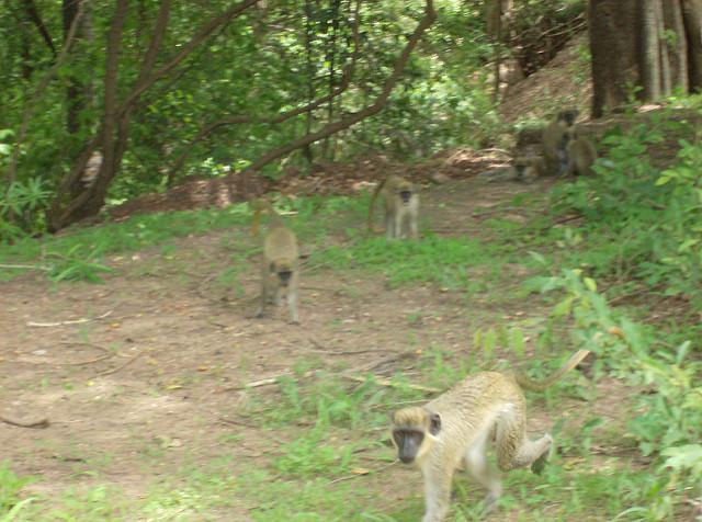 ニョコロ=コバ国立公園の画像11