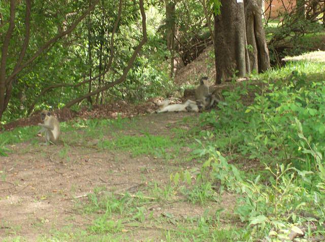 ニョコロ=コバ国立公園の画像12