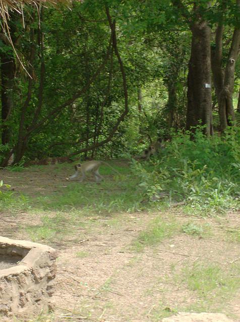 ニョコロ=コバ国立公園の画像13