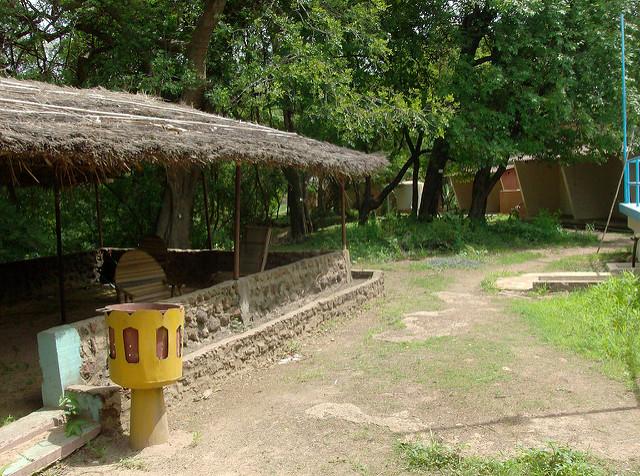 ニョコロ=コバ国立公園の画像15