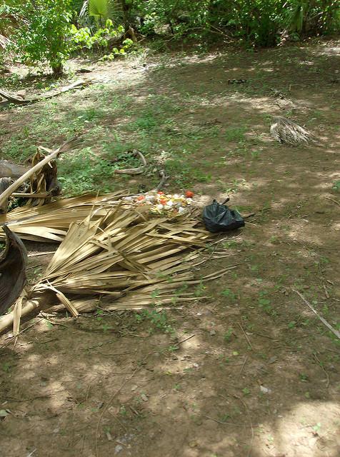 ニョコロ=コバ国立公園の画像20
