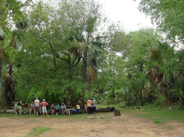 ニョコロ=コバ国立公園の画像28