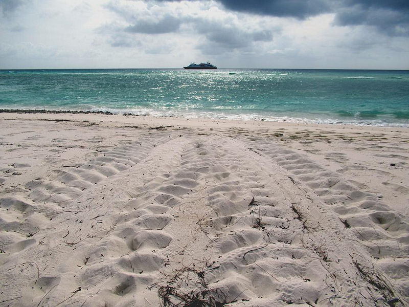 アルダブラ環礁の画像7