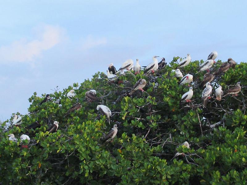 アルダブラ環礁の画像16