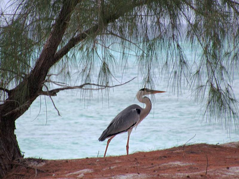 アルダブラ環礁の画像17