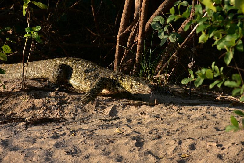 セルー動物保護区の画像1