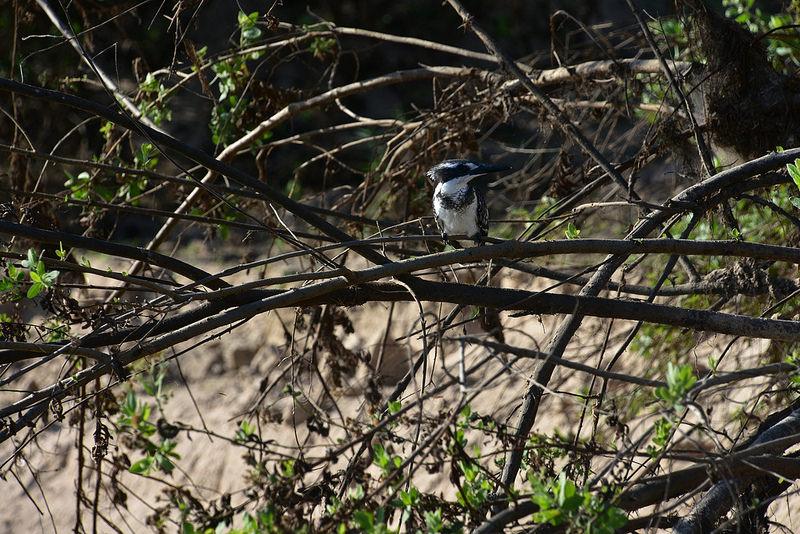 セルー動物保護区の画像3