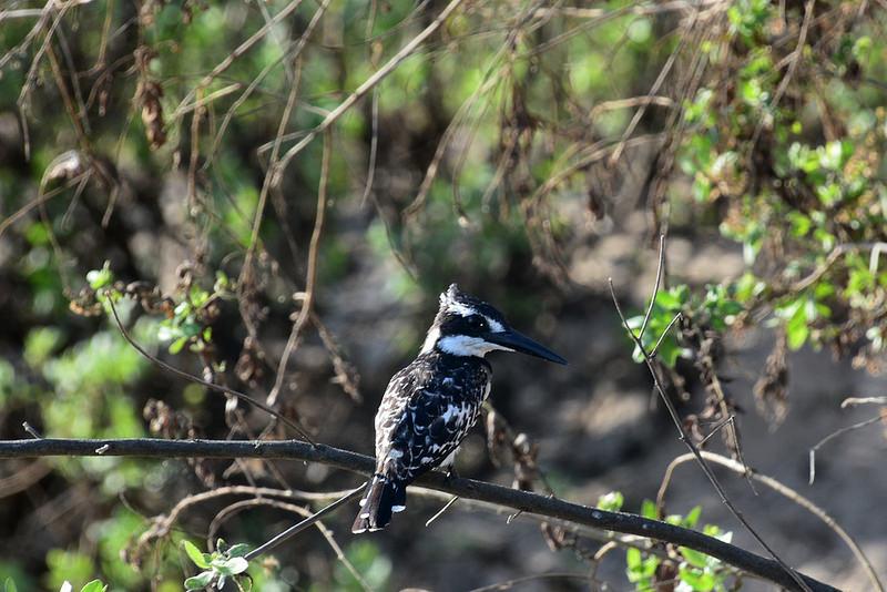 セルー動物保護区の画像4