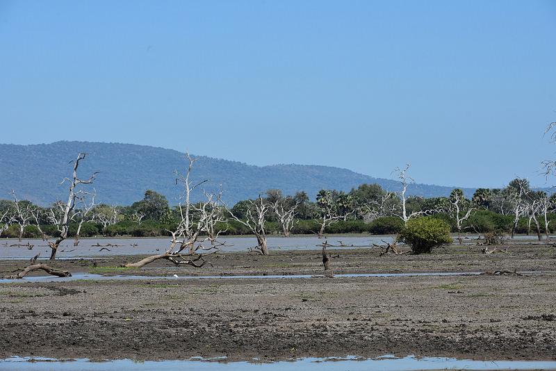 セルー動物保護区の画像8