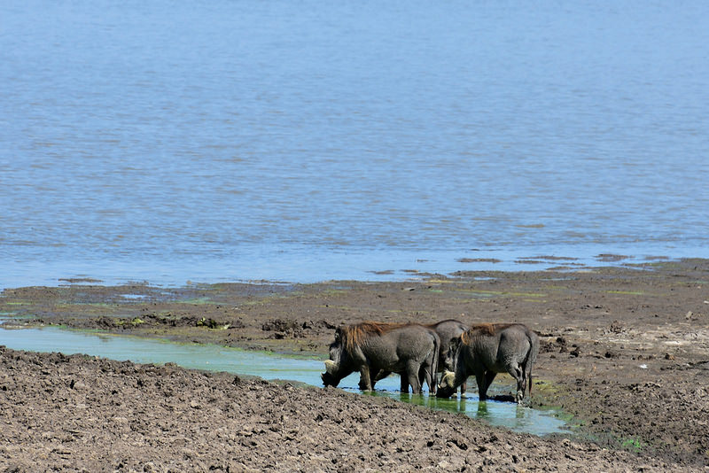 セルー動物保護区の画像17