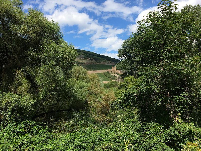 ライン渓谷中流上部の画像13