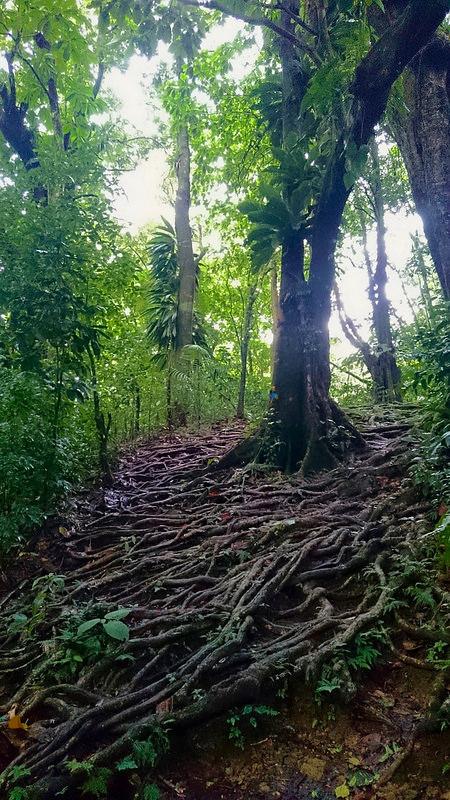 モルヌ・トロワ・ピトン国立公園の画像2