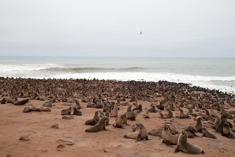 ナミブ砂海の画像3