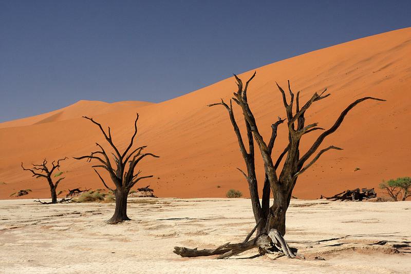 ナミブ砂海の画像7