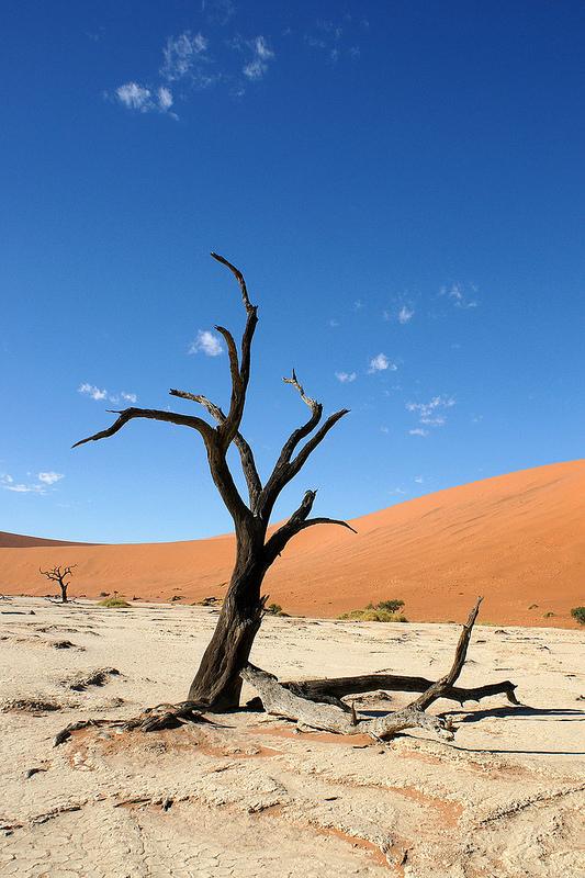 ナミブ砂海の画像8