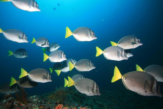 コイバ国立公園とその海洋保護特別地帯の画像1