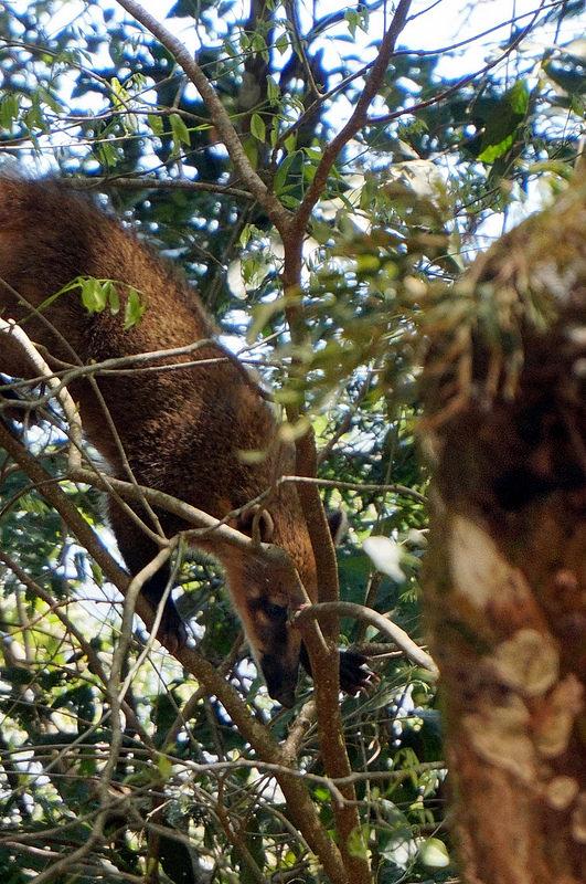 イグアス国立公園の画像6