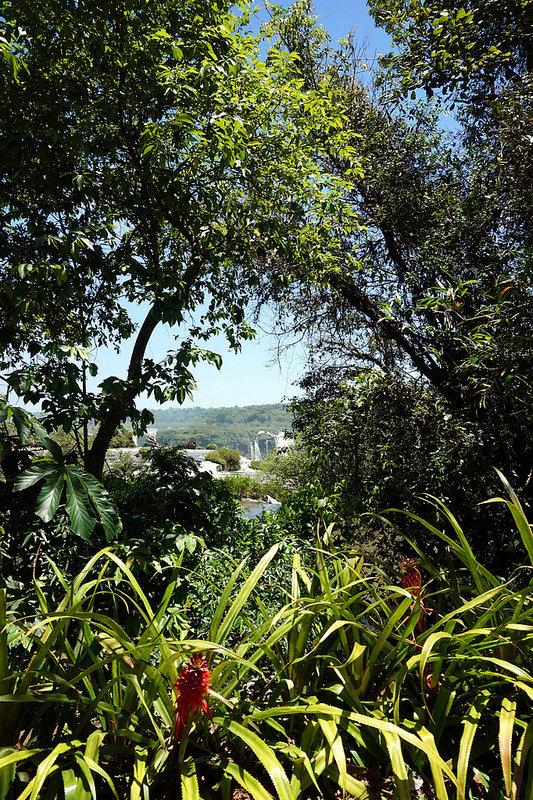 イグアス国立公園の画像13