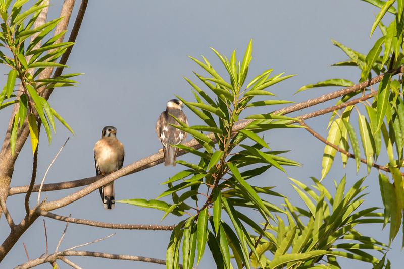 カナイマ国立公園の画像6