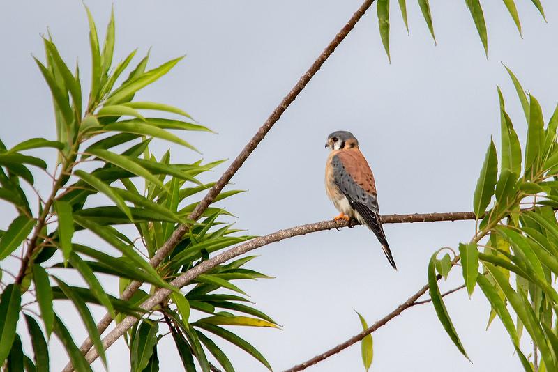カナイマ国立公園の画像7