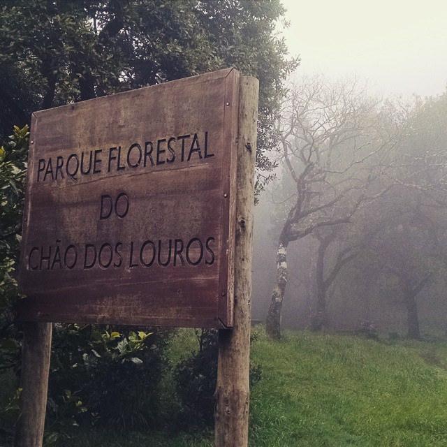 マデイラ島の照葉樹林の画像3