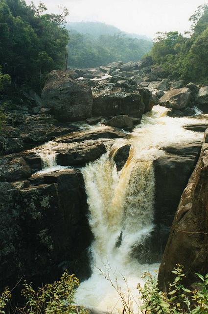 アツィナナナの雨林群の画像1