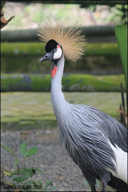 キナバル自然公園の画像6