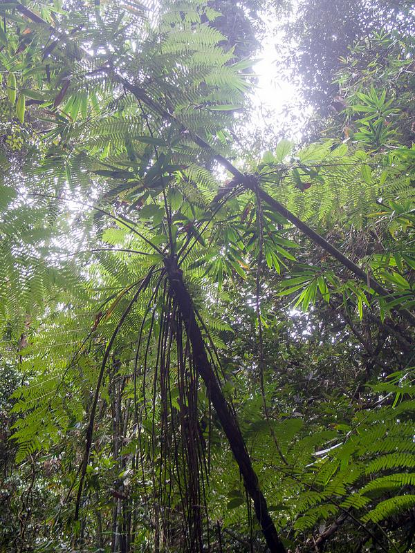 キナバル自然公園の画像9