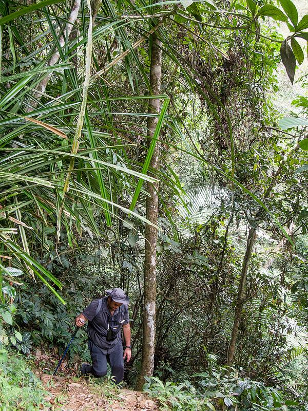 キナバル自然公園の画像10