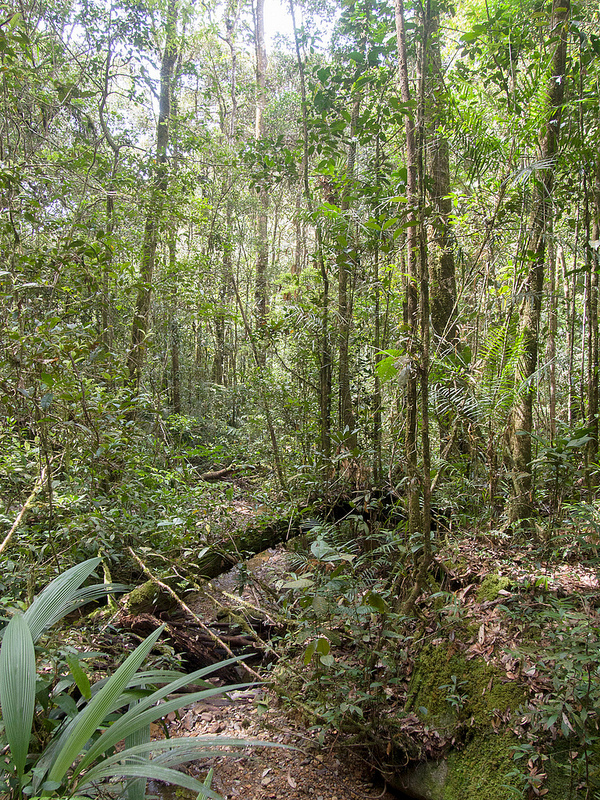 キナバル自然公園の画像23