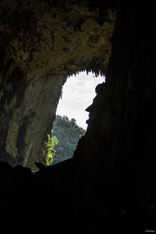 グヌン・ムル国立公園の画像6