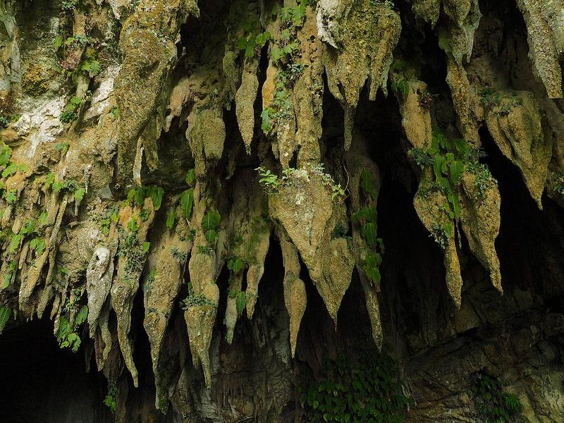 グヌン・ムル国立公園の画像9