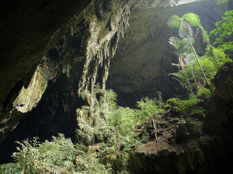 グヌン・ムル国立公園の画像11