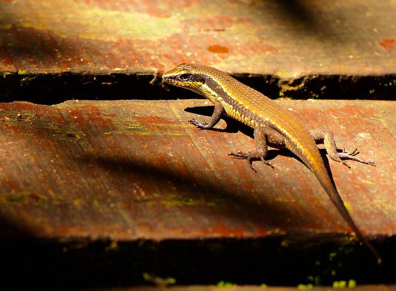 グヌン・ムル国立公園の画像15